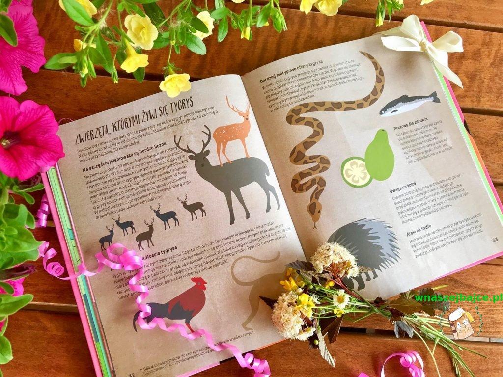 książeczka dla dzieci Oko w oko z tygrysem